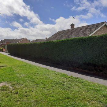 Hedge work