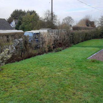 Before hedge restoration