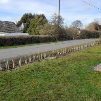 After hedge restoration