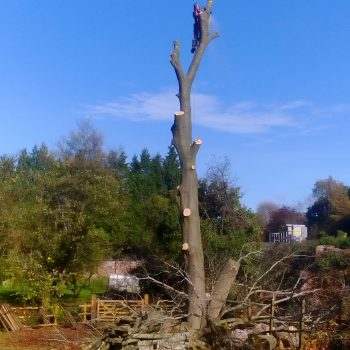 After tree surgery